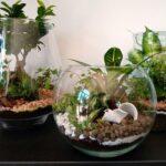 Floralia - Terrarium