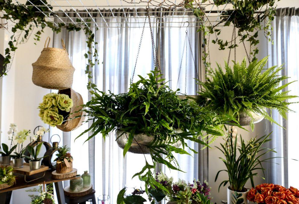 Floralia - Fiori e piante